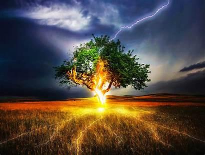 4k Lightning Fire Tree Strike Wallpapers Ultra
