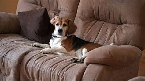 astuce pour nettoyer canapé en tissu l 39 astuce pour nettoyer un canapé facilement