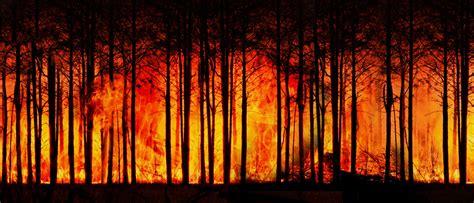 incendies en amazonie la classe politique sempare de