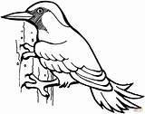Woodpecker Coloring Bird Woodpeckers Printable Drawing Animal Sheet Birds sketch template