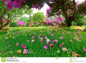 The flowers on the lawn stock photo. Image of scenery ...