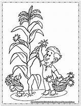 Corn Coloring Printable Thanksgiving Picking Wheat Cornfield Drawing Sheets Candy Fruit Colouring Sheet Cob Maiz Plant Vegetables Imagenes Getcolorings Knowing sketch template
