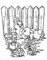 Coloring Gardening Vegetable Bunnies Printable Sheets Rabbits Flower Animal Preschool Bible Child Date Nature Popular Hmcoloringpages sketch template