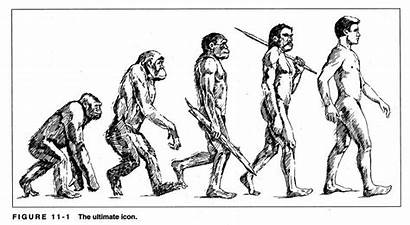 Evolution Drawing Icons Ape Drawings Icon Evidence