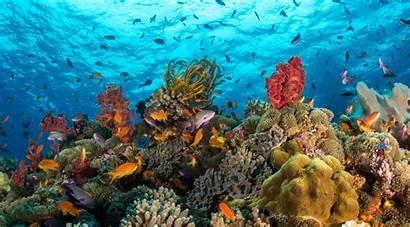 Sea Ocean Desktop Backgrounds Wallpapers Biodiversity Marine