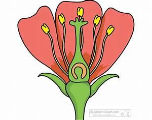 Flower Quiz - Biology