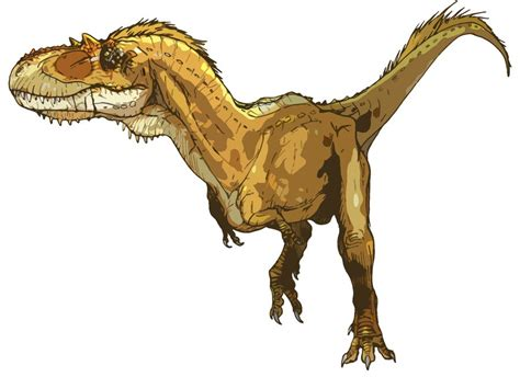 gorgosaurus pictures facts dinosaur