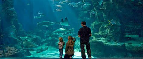 15 aquariums incontournables 224 visiter en famille