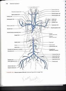 Blood Vessel Diagram Quiz