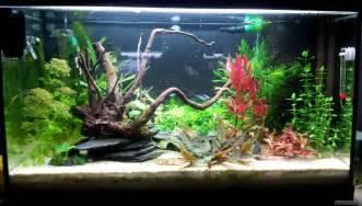 kinderzimmer flowgrow aquascapeaquarien datenbank