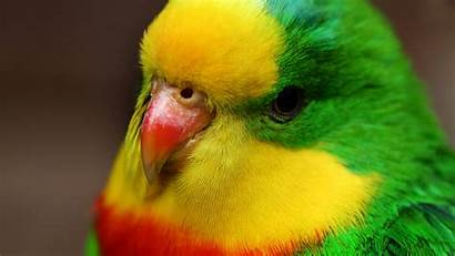 Birds Colorful Wallpapers Parrot Resolution Screen Laptop