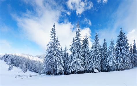 winter hd wallpaper and background image 2560x1600