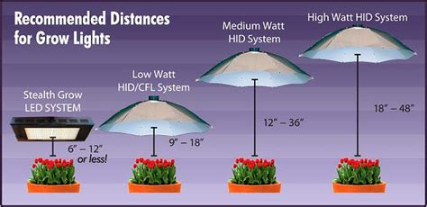 can you use a flood light to grow plants hps lighting for cannabis plants green cultured