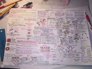 Ocr A Level Biology  Transport In Animals Topic Mind Map
