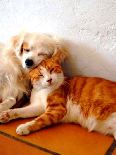 dogs  cats   love  cuddle life  dogs