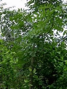 Eberesche Im Garten : ein garten in norddeutschland ~ Yasmunasinghe.com Haus und Dekorationen