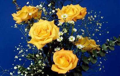 Yellow Rose Flower Wallpapers Roses Flowers Wallpapercave