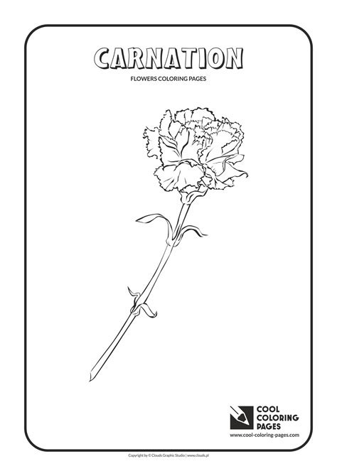 cool coloring pages carnation coloring page cool