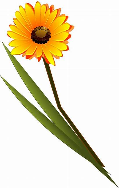 Clip Flower Flowers Clipart Gerbera Yellow Orange