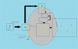 Lysogeny  Prophage Integration  Integration  Prophage