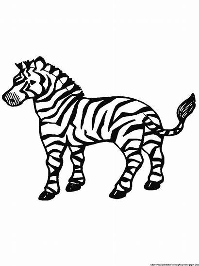 Zebra Coloring Pages Printable Activity Few Paint