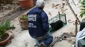 L'inquilina trasloca e lascia sul terrazzo cinque gattini Animali QuotidianoNet