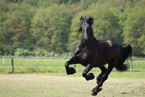 Horse 1080p Widescreen