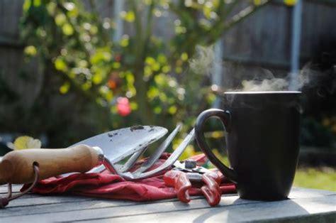 coffee grounds   garden