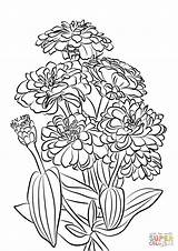 Coloring Flowers Zinnia Pages Youth Age Printable Drawing Nata Supercoloring sketch template