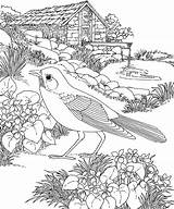 Coloring Robin Bird Pages Nature Scene sketch template