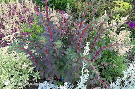colorful perennials perennials made easy how to create amazing gardens get