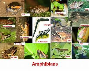 List of Amphibian Animals | TutorVista