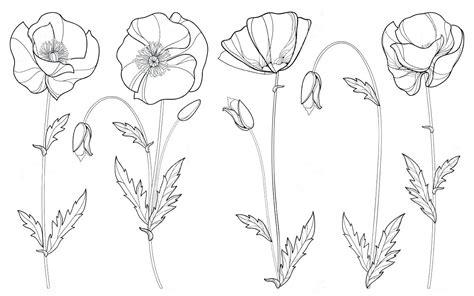 printable daffodil outline template