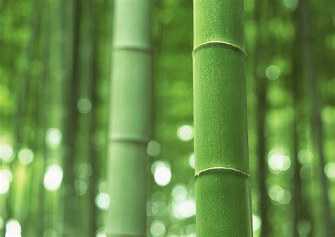bamboo homex
