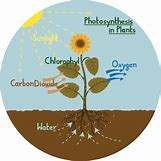 Oxygen And Carbon Dioxide Cycle Simple | 400 x 400 jpeg 40kB