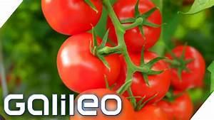 Die Beste Tomate