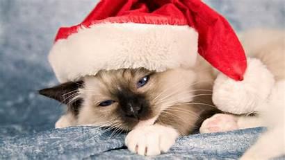 Kitty Christmas Hello Cat Kitten Cats Xmas