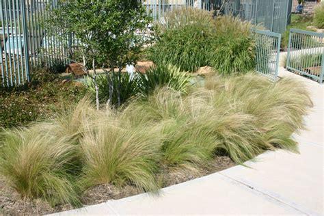 landscape grasses plant gallery ornamental grasses haslet tx landscaping