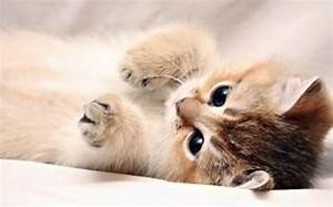 Résultat d'images pour photo chat trop mignon