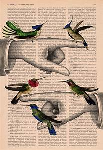 17 Best Images About Hummingingbird On Pinterest