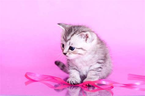 gray cat names top 28 names for grey cats names for gray kittens slideshow grey cat names for males cute