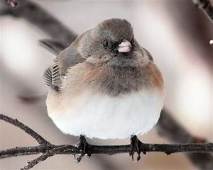 Fat birds are the cutest | Stuff i like | Pinterest | Bird ...
