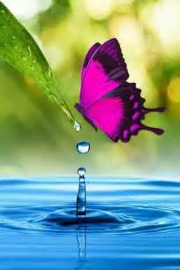 Water Beautiful Purple Butterflies