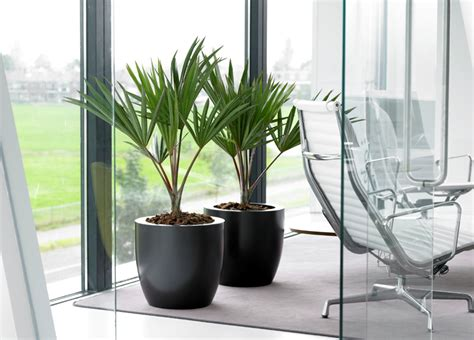 plante verte bureau 5 ways to your office boardroom less boring