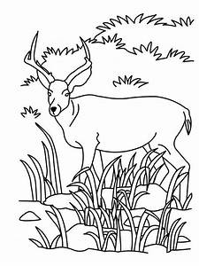 Antelope Coloring Pages - Preschool and Kindergarten