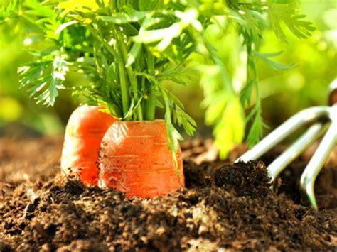 Gartentipps Das Ist Im Mai Zu Tun Wetterde