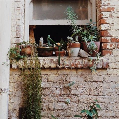 Best Indoor Window Sill Plants by 1000 Ideas About Window Plants On Apartment