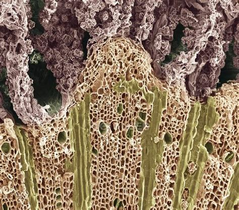 structural anatomy stock  royalty  images