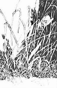 DRAWING GRASS (Negative Drawing techniques)at MIKE SIBLEY ...