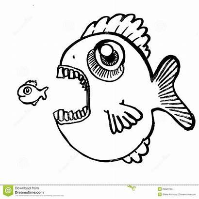 Vis Fish Vissen Eating Eten Weinig Grote